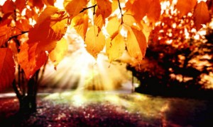 Праздничная осень!