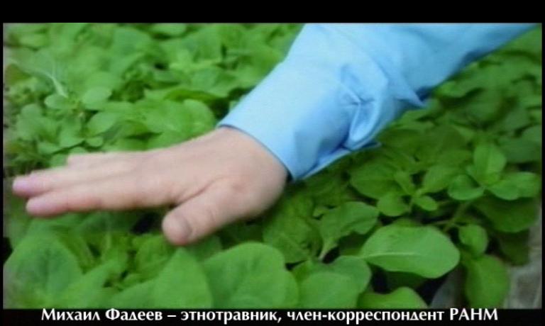 Фадеев в сериале «Настоящая Ванга» - травы