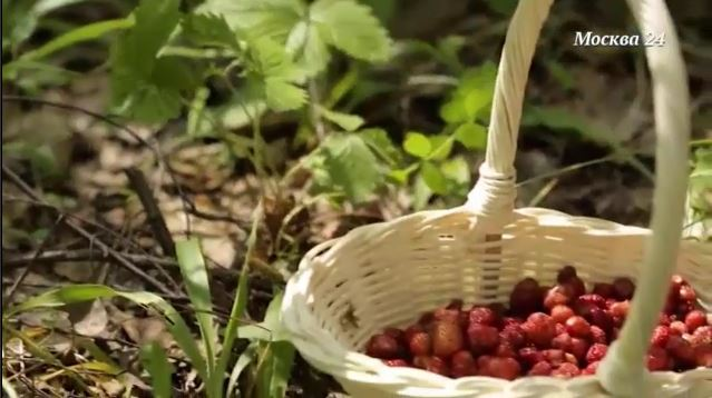 Земляника – чудо-ягода, в ней полезно всё!