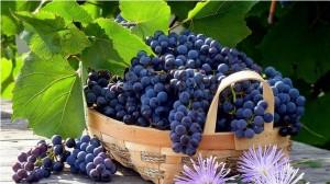 Черный виноград – прекрасное общеукрепляющее средство