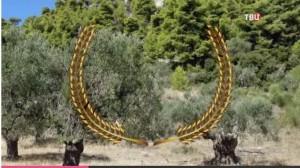 Из ветвей оливкового дерева победителям плели венки