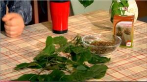 Кора, листья и соплодия ольхи обладают целебными свойствами