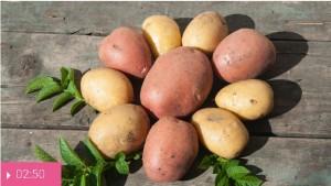 Картофель – от язв, простуды и нервов