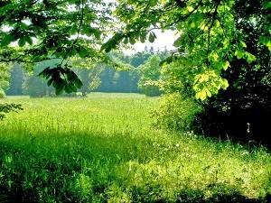 Это поле, это лес, это тысячи чудес!