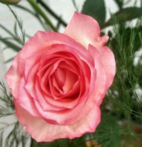 Средство для сужения влагалища после родов – елей ОНА9 – отзывы