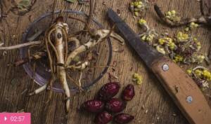 Корень здоровья – в корнях растений