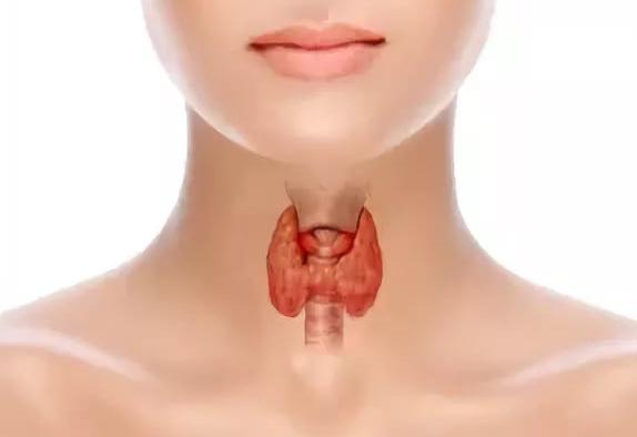 Строение и функции щитовидки