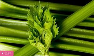 Сельдерей – продукт здоровья