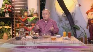 О пользе чайного гриба – этнотравник Фадеев