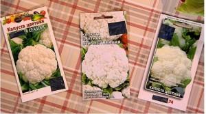 Холодостойкие сорта цветной капусты