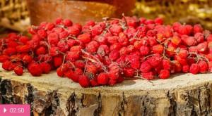 Красная рябина – средство от авитаминоза