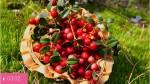 Брусника – боровая ягода здоровья и долголетия
