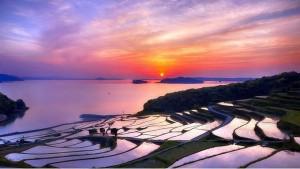 Рис на затопленном поле даёт в 20 раз больше урожая
