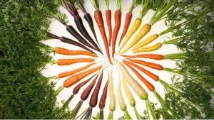 Красная и фиолетовая морковь