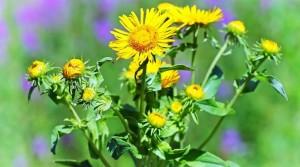 Травы помогут оздоровить кожу