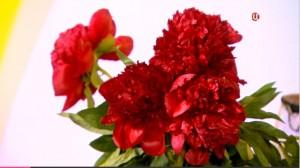 Пион – царь цветов