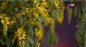 Цветы донника с медовым ароматом