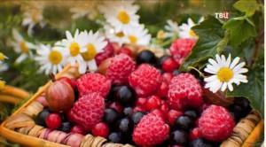 Здоровье в лукошке