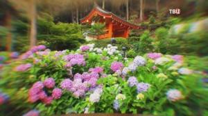 Священный цветок в Японии