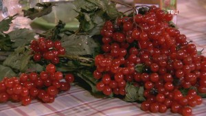 Калина-ягода – «каленая ягода»