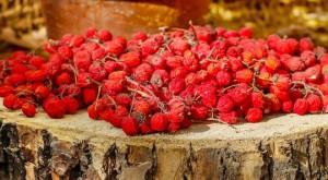 Красная рябина – от авитаминоза