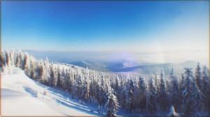 Народные приметы – лес зимой