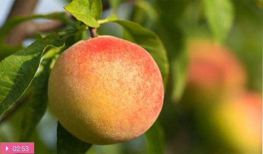 Персик для нежной кожи