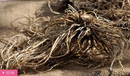 Как варить корни валерианы