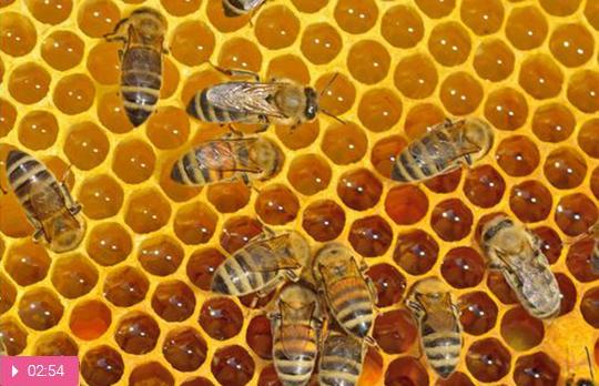 Пчелы и народные средства от насморка