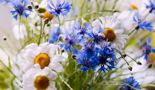 Травы помогут вылечить аллергию