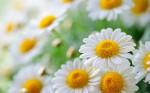 Целебные травы от аллергии