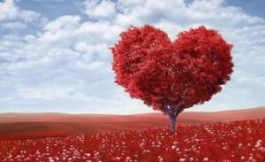«Лекарство для любви»