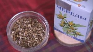 Трава череда – лечебные свойства